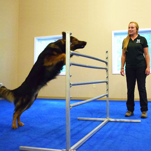 Dog Agility Mats Interlocking Tiles neuman k9.