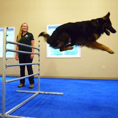 Dog Agility Mats Interlocking Tiles neuman k9 jump.