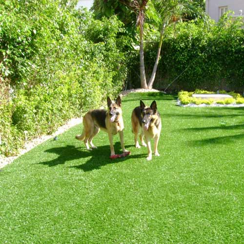 Guide to Choosing Artificial Turf for Dog Agility