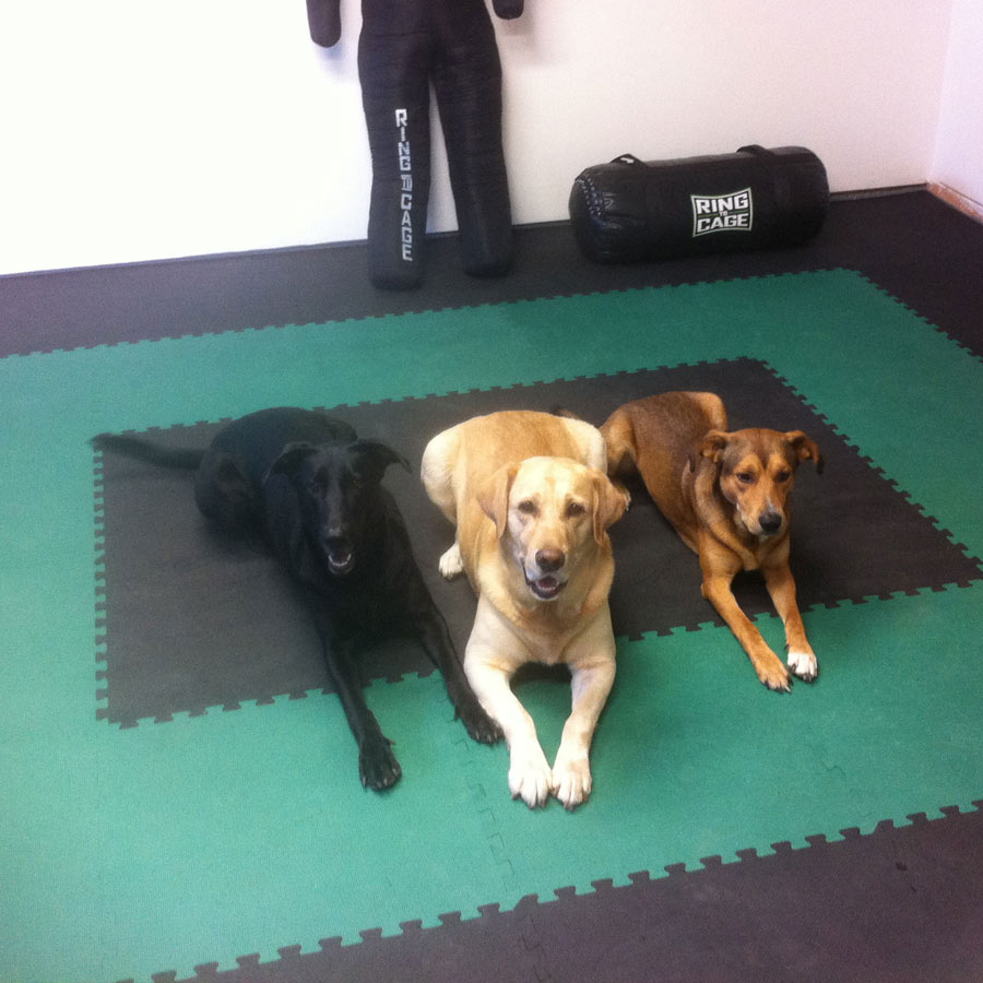 Home Exerice Foam Floor showing three dogs on mats.
