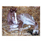 Horse Stall Foaling Mats All Sizes thumbnail