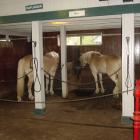 Horse Stall Mats 10x12 Ft Kit