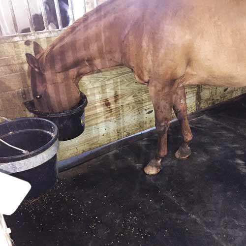 Horse Stall Mats 14x16 Ft Kit