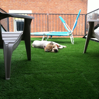 Artificial Outdoor Turf dog