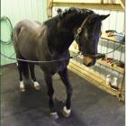 Horse Stall Mats Cascade 3/4 Inch 10x12 Ft Kit