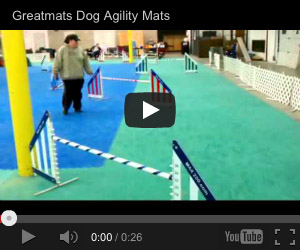 dog agility video
