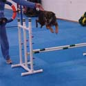 Dog and Agility Flooring